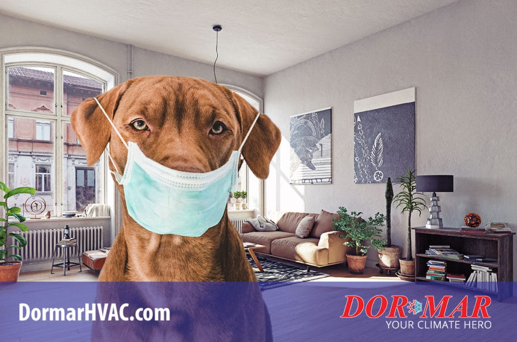 Improve indoor air quality, deal with allergens and pet dander